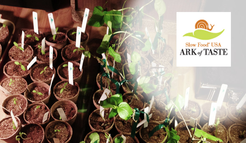 ArkofTasteSeedlings
